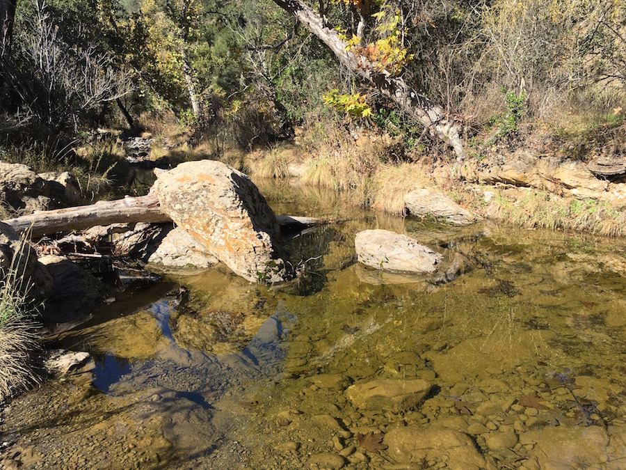 Coyote Creek Henry Coe SP